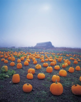 pumpkin_patch_400